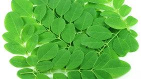 feuilles-de-moringa