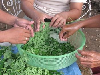 recolte des feuilles