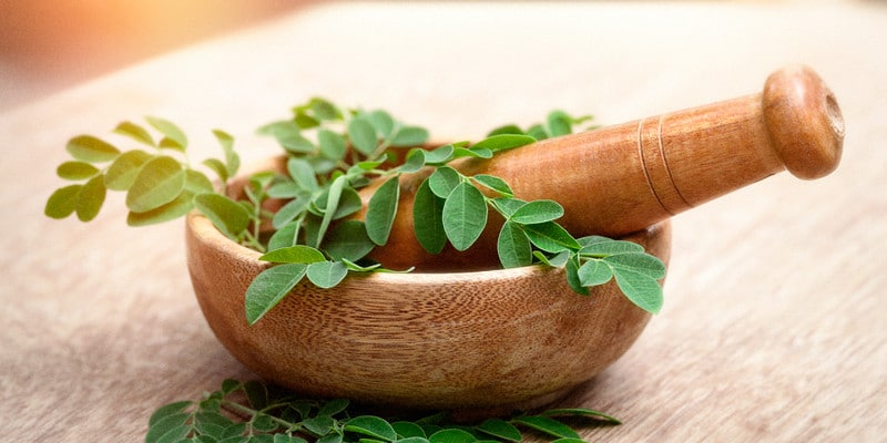 Grounded Moringa for Weight Loss