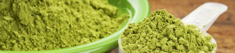 La poudre de Moringa, un allié de choix dans la perte de poids